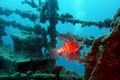 ../images/Underwater-diving-wreck-120.jpg