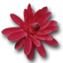 ../images/icon_flower1.jpg