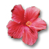 ../images/icon_hibiscus.jpg