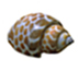../images/icon_shell2.jpg