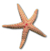 ../images/icon_starfish.jpg